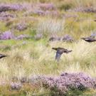 The Revive Coalition is campaigning for grouse moor reform (Owen Humphreys/PA)