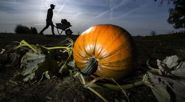 Pumpkin sales are up (Danny Lawson/PA)