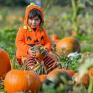 Khloe, aged two, from Bristol, rests among pumpkins at Farringtons Farm in Somerset (Ben Birchall/PA)