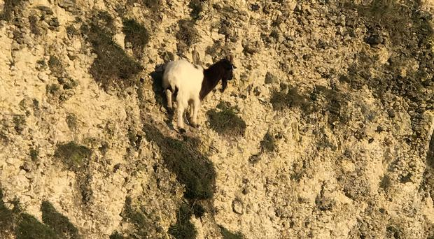 Goat stuck on a cliff in Henfield, West Sussex (RSPCA/PA)