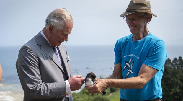 The Prince of Wales meets a Hutton's shearwater bird (PA)