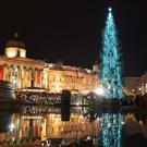 The Trafalgar Square Christmas tree is lit up in central London (Dominic Lipinski/PA)