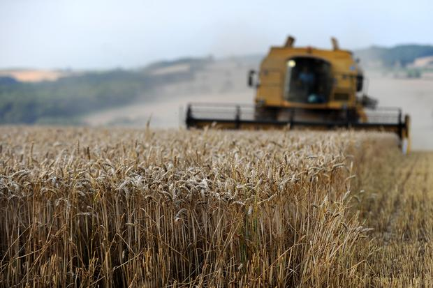 Increased global yields were only made possible with a concurrent increase in the use of pesticides (Andrew Matthews/PA)