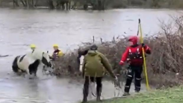 Two horses make a lucky escape from a flooded field in Barnsley.Credit: South Yorkshire Fire and Rescue