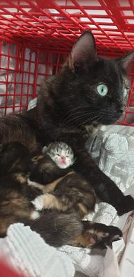 One cat was abandoned while pregnant and has now adopted another abandoned kitten, and taken it into her litter. (RSPCA)