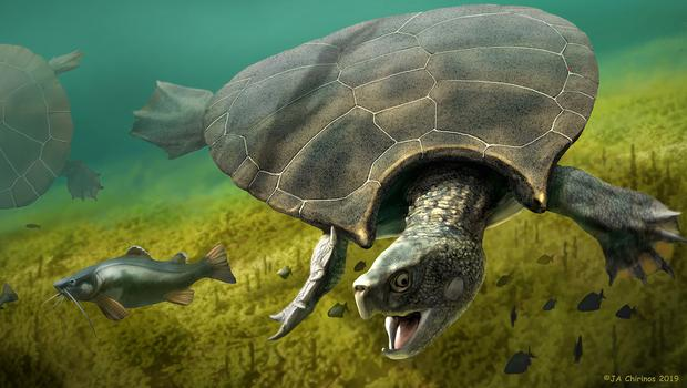 The turtle species was first described in the mid-1970s (Jaime Chirinos/PA)