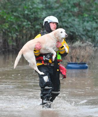 A dog is rescued in Nantgarw, Wales