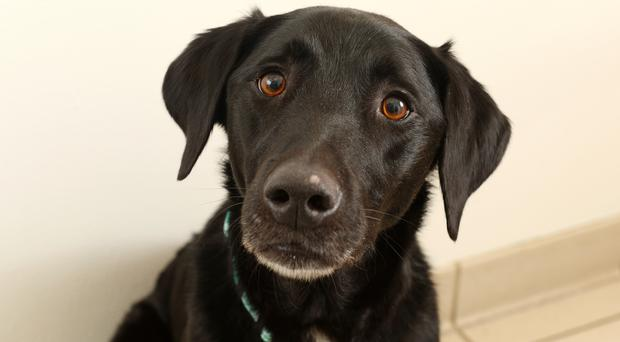 Marley the dog (PDSA/PA Wire)