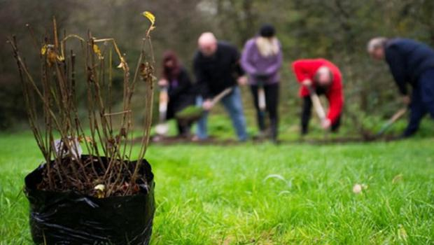 Community groups and individuals are taking part in the tree planting (WTLM/PA)