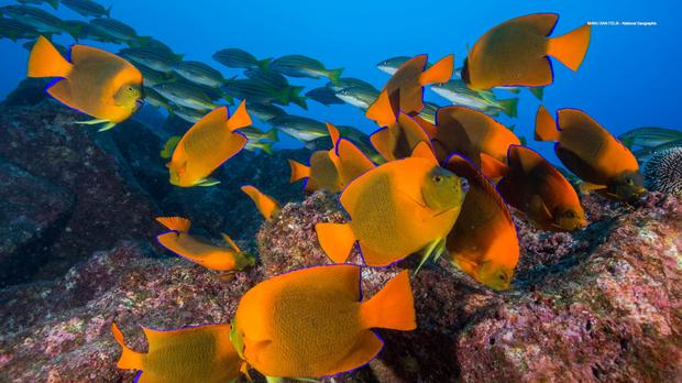 Marine life could be substantially rebuilt with large scale action to tackle pressures (KAUST/PA)