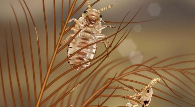 Dining on dinosaur feathers: lice discovered in amber (Chen Wang/PA)