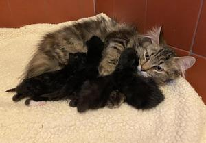 The kittens were eventually reunited with their mother (RSPCA/PA)