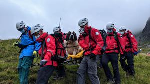 Daisy the St Bernard is taken off Scafell Pike by Wasdale Mountain Rescue Team (Wasdale Mountain Rescue Team/PA)