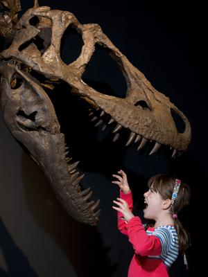 Rosa Connolly, 10, gets a preview of the Tyrannosaurs exhibition (Neil Hanna/PA)