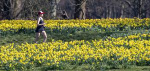 A lady runs through daffodils in Sefton Park, Liverpool (Peter Byrne/PA)