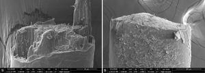 A jagged broken hair of a human, left, versus the clean break of a boar hair, right (Wen Yang/PA)