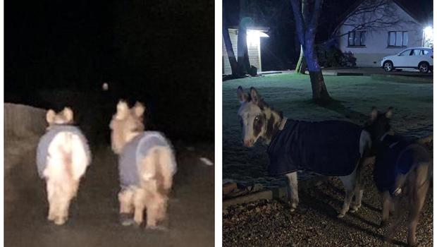 Police spotted two donkeys walking on a road in Aberdeenshire (Police Scotland/PA)