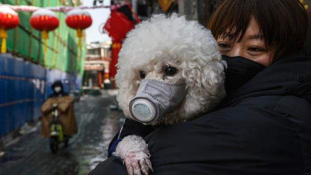 A woman and her dog wear face masks in Beijing, China