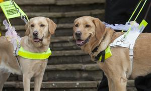 The charity Guide Dogs says travel will become more difficult for people with sight loss (Guide Dogs/PA)