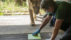 ZSL London Zoo installs social distance markers to prepare for reopening (ZSL/PA)