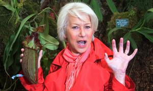 Dame Helen Mirren with a new cultivar, Nepenthes Helen, a carnivorous plant named after her at the Borneo Exotics garden at the Chelsea Flower Show in 2011 (PA)