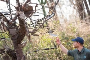 Harry views a tree sculpture made from poachers' snares recovered by park rangers (Dominic Lipinski/PA)