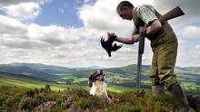 Gamekeeper Jake McWatt starts off the Grouse season on Dawyck estate in the Scottish Borders, pictured with his dog Jay