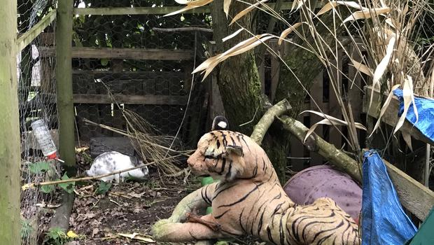 The tiger with one of the rabbits (RSPCA/PA)