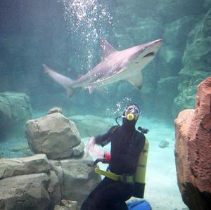 Adventurous holidaymakers are trying out activities like scuba diving, according to a new study