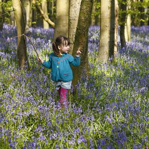 Three-year-old Cecily Dargan carefully picks her way through bluebells in woods near Chichester, West Sussex (PA)