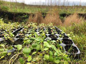 Crops for food such as water cress, as well as plants for flavourings are being grown in the trial (Emily Beament/PA)