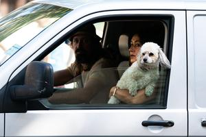 A dog leans out of a van window to find a breeze on the Marylebone Road (Aaron Chown/PA)