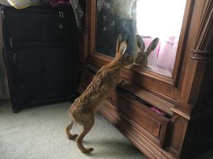 Clover inspected herself in the mirror during a recent venture into the house (Natasha Terry)