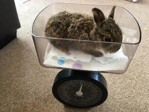The family monitored Clover's weight as she grew (Natasha Terry)