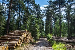 The strategy could help boost sustainable forestry (Forestry Commission/PA)