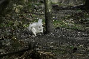 The sighting and photographs were reported to Saving Scotland's Red Squirrels (Chris Eddington/PA)