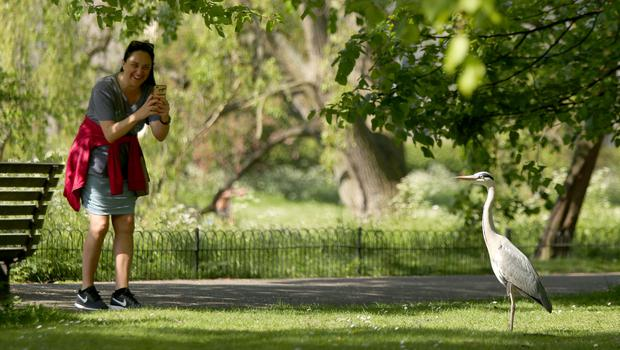 A woman takes a photo of the wildlife in Regent's Park, London (Yui Mok/PA)