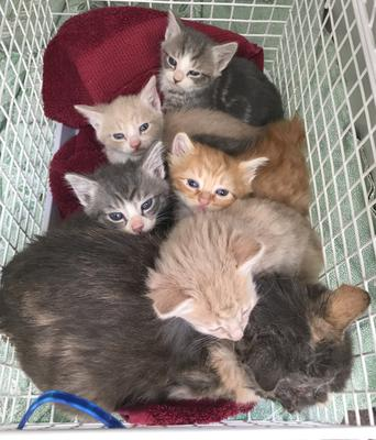 Cats Protection fears there could be 85,000 extra kittens born this year because of lockdown. (Cats Protection)