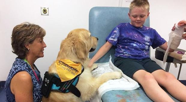 A child in hospital during a visit from a therapy dog (University Hospital Southampton/PA)