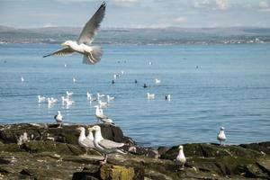 Researchers studied herring gulls (Danni Thompson/PA)