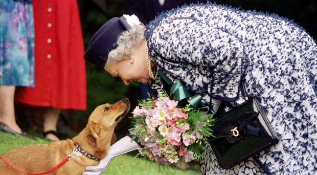 The Queen greets a dog she bred (PA)