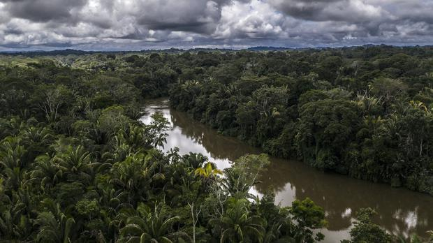 Supply chains can be linked to deforestation, destruction of habitat and human rights abuses (Marizilda Cruppe/WWF-UK/PA)