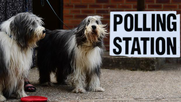 Brutus and Oscar (right) wait for their owners to cast their votes at a polling station for the European Parliament election.