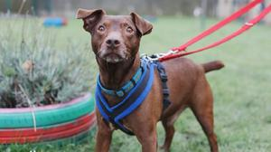 Diefer has been with the RSPCA for more than a year (RSPCA)
