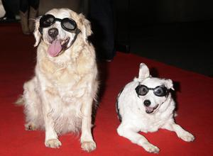 Blue Peter Dogs Mabel and Lucy in 2009 (Yui Mok/PA)