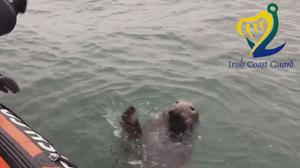 A friendly seal greets the coast guard in Howth Harbour (Howth Coast Guard/Twitter)