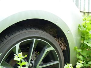 The nest was made in the parked-up car's wheel arch