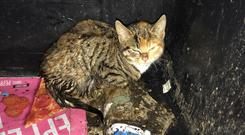 The young cat was found in a bid (RSPCA/PA)
