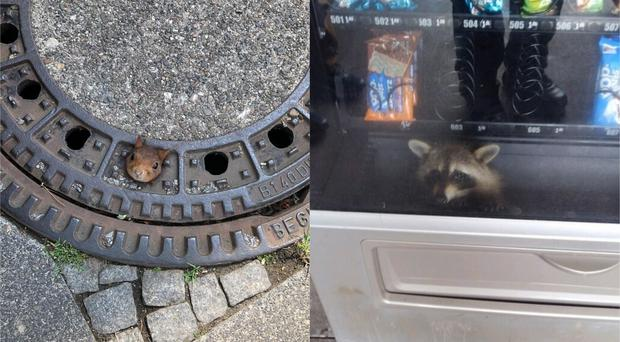A squirrel and a raccoon were among the animals rescued from tricky spots in 2019 (Feuerwehr Dortmund/Volusia County Sheriff)