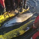 Firefighters rescue dolphins near Standford-le-Hope in Essex (Essex County Fire and Rescue Service/PA)